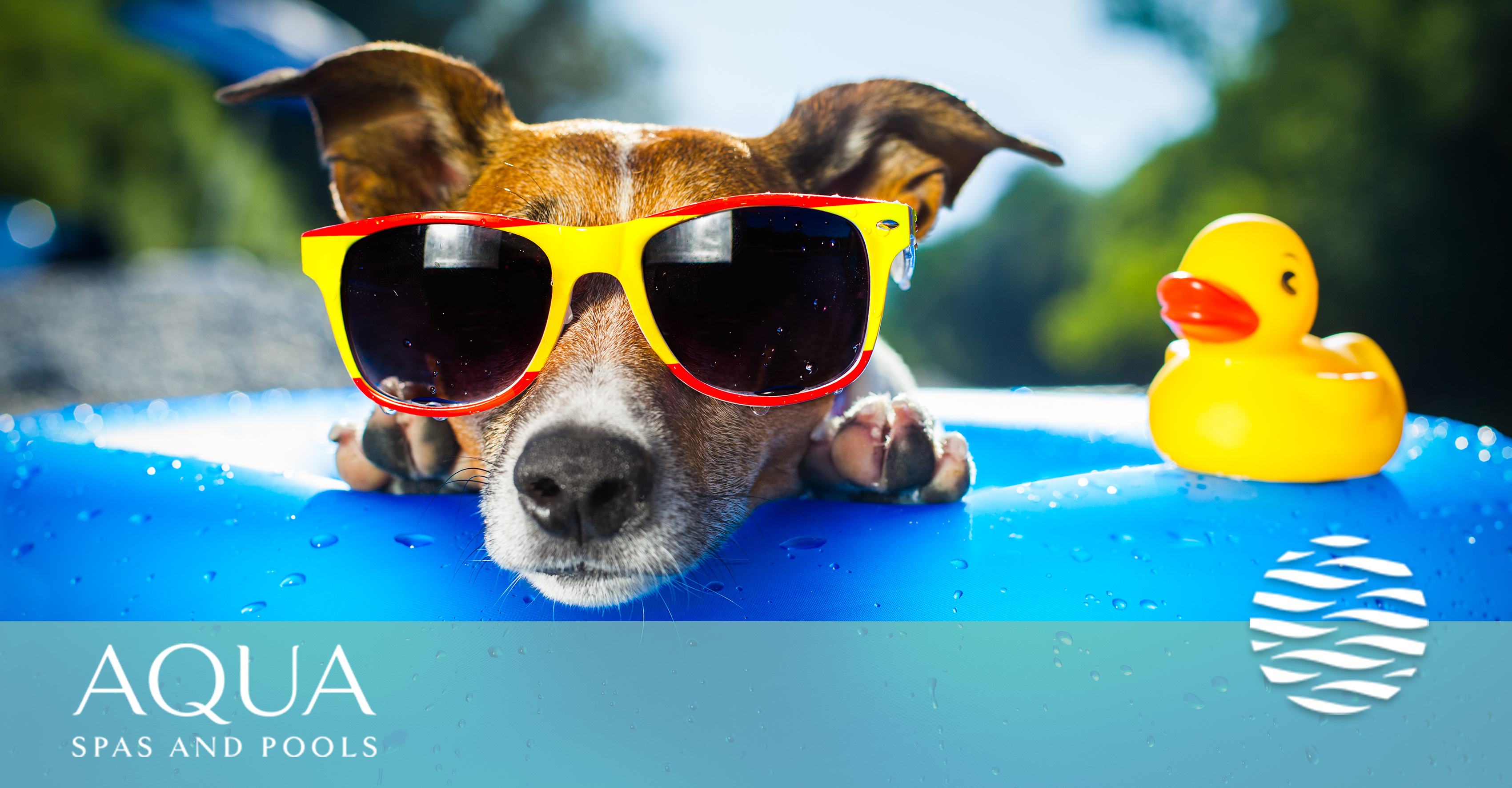 dog friendly pools